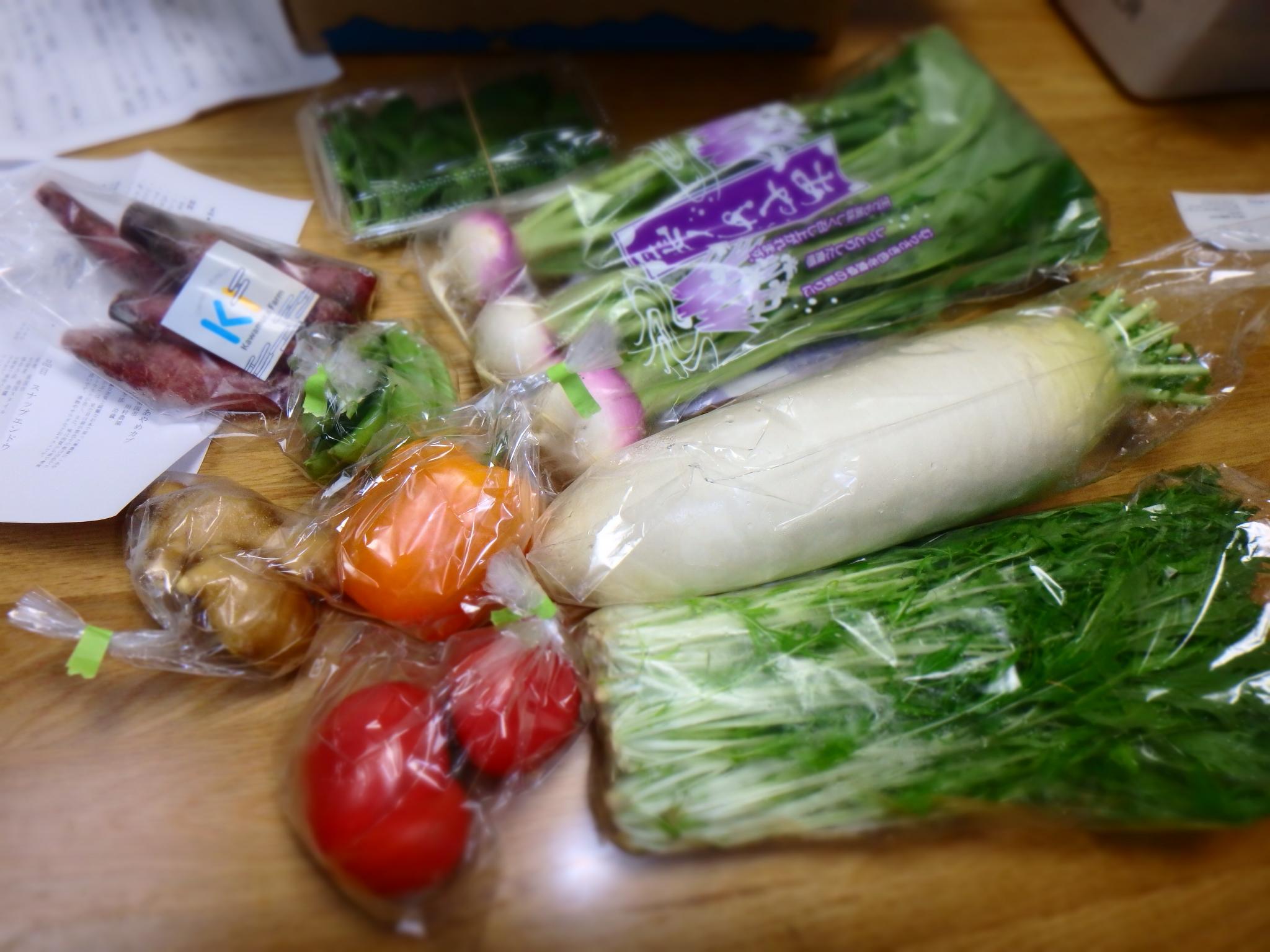 土佐野菜で届いた野菜の数々